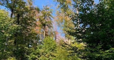 Unser Wald leidet