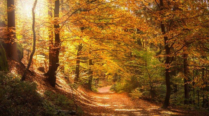 Welche Zukunft hat unser Wald?